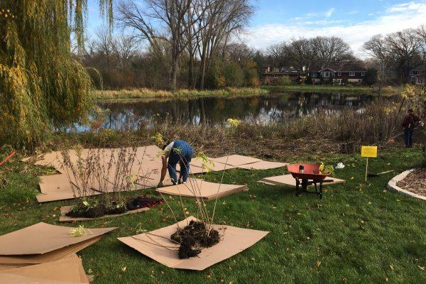 Sheet mulching invasives along the creek.
