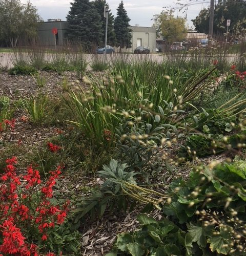The textures and colors of this native rain garden