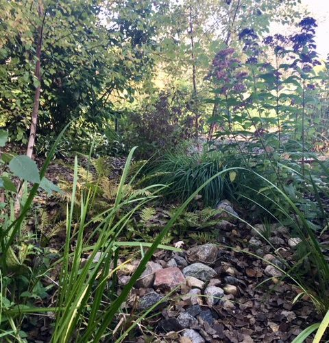 Instead of saturated lawn.....native wonderland
