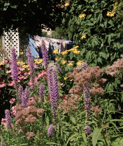 Pollinators in the rain garden