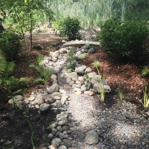 Phase 1 Dry creek in the dappled shade