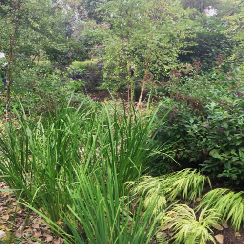Instead of a saturated lawn....textural natives