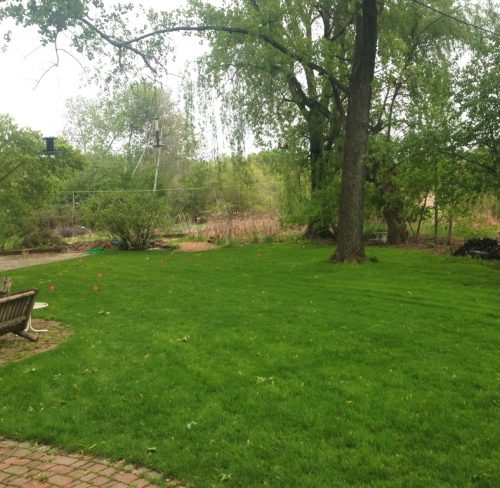 Wetland adjacent lawn before