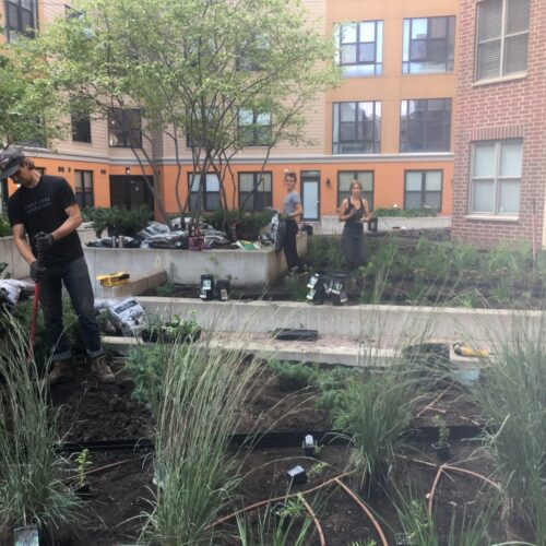 In progress: Mulching with crew