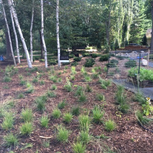 Completed installation of native grasses in place of traditional lawn