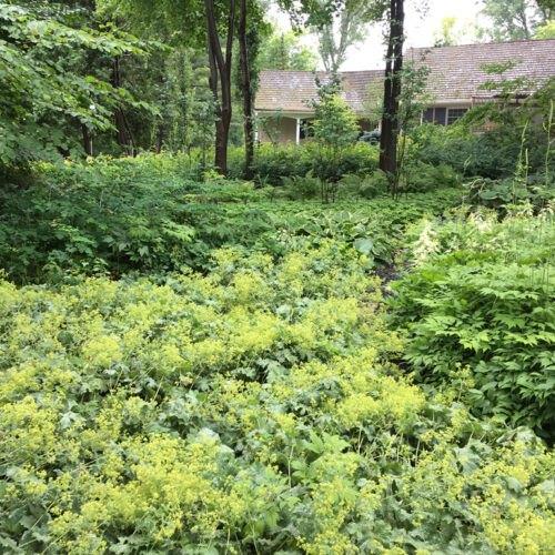 Overgrown yard before work started