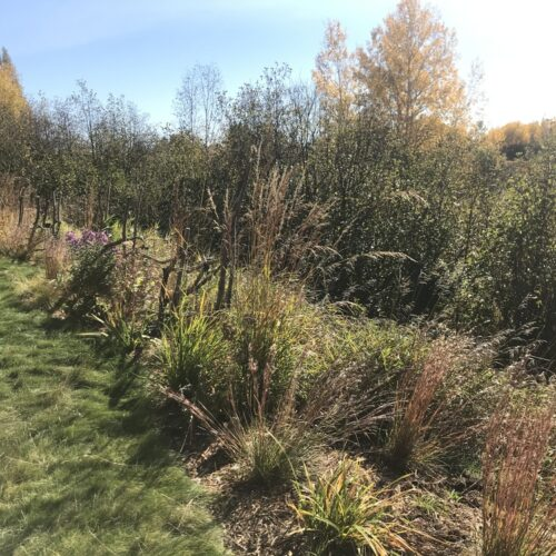 After: Native planting abutting wetland with low-mow fescue lawn