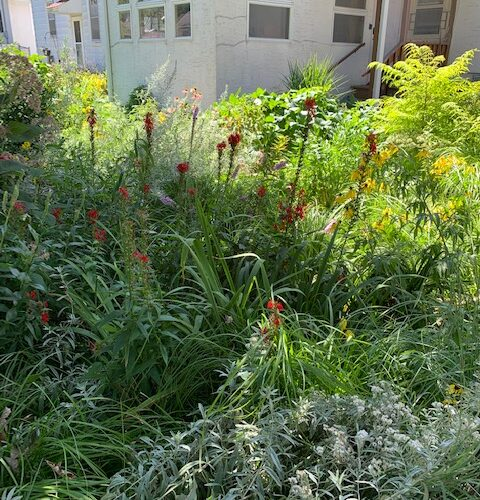 After: Backyard - a client who loves it wild!