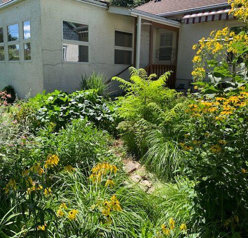 After: Backyard mid-summer